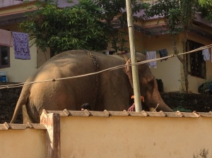 An elephant, just strolling past our house.